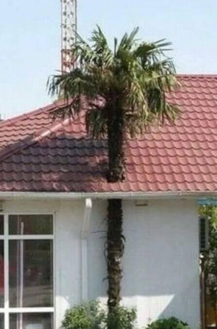 arbre-milieu-toit